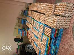whole sale eggs for sale in mombasa
