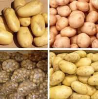 2016 South Africa New Crop Fresh Potato