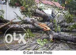tree felling and site clearings