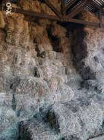Boma Rhodes Grass hay feed for your dairy cows or cattle.