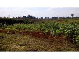 Very Prime 10 acres for sale in Runda Mumwe at ksh 70 million per acre