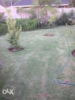 instant lawn/rubbish removals.tree felling and palm prunning