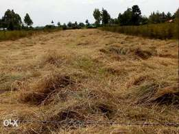 Market for hay