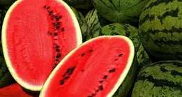Water melons sukari f1 grade 1 ready over 100 tonnes