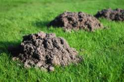Removals Of Moles and Bees hives in Cape Town