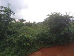 plot of land 50ft by 100ft at Egor community
