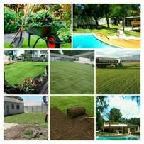 Professional instant lawn, Turf Suppliers and installers