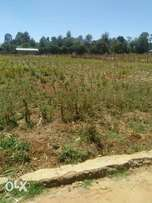 Plot in ilula half of an acre