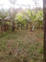 This fertile land going for only 2m acre.