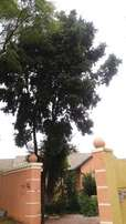 Siza first Tree felling & refuse removal