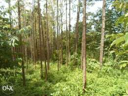 0.5 of an acre for sale in Nyamataro area of Kisii county