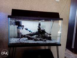 2ft (60l) fish tank and accessories