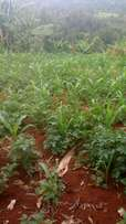 Land;1/2acre at Wamagana Tetu Nyeri near (Githinjiro).