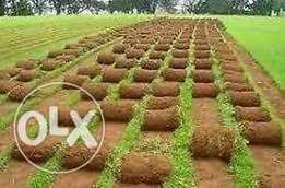 Kikuyu and LM grass for sale