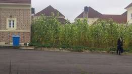 A land in Mac global estate , buy and build.