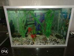 Home or office aquarium 15k only with aluminium finishing.