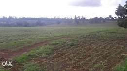 40 acres Prime Land for sale in Limuru