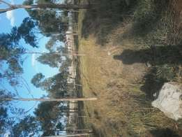 40*80 plots for sale at Juja, next Jkuat to jkuat. 900mtrs off tarmac
