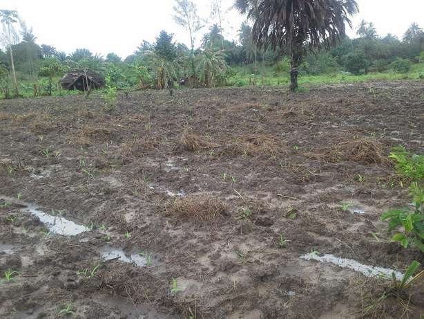 Good,well documented and Affordable Property for sale Diani Beach - image 2
