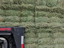 High Protein Alfalfa Hay In Bales for sale