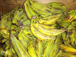 Best Plantain Bananas in town