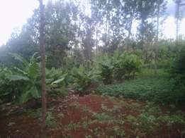 prime 50*100 plot at Majimbo_very close to Embu Majimbo Market