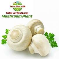 Mushroom Production Businesses and Partnership Packages