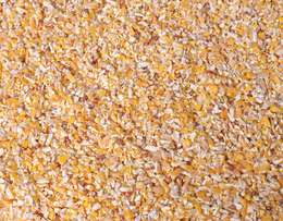 Crushed Yellow Maize for Animal feed
