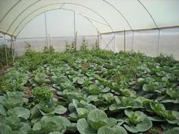 Farm and Green Houses to Let