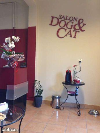 Strzyżenie Psów Dogcat Salon Dla Psów Psi Fryzjer 11 Lat Na