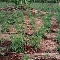 Must have Fertile land with title on table in Zirobwe