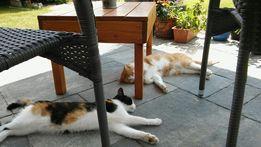 Gliwice Psi Fryzjer Psi Hotel Szkolenie Strzyżenie Psów I Kotów