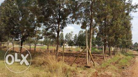 Kiambu Kamiti road Mugumo 1/4 Acre Plots for Sale Nairobi CBD - image 1
