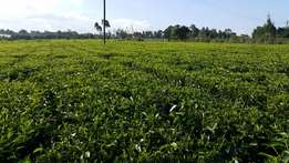 5 acres For sale with Mature tea and touching tarmac in Redhill Limuru