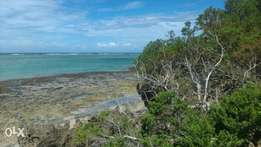 superb 8 acres land fronting the ocean at tiwi southcoast 12m per acre