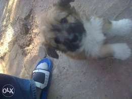 bedroom pup for sale R300