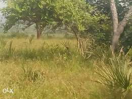 An ideal 10acres shamba for sell mwakirunge in kilifi at ksh 500k/acr