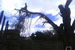 Tree felling , site clearance , stump removal , rubbish removal , trim