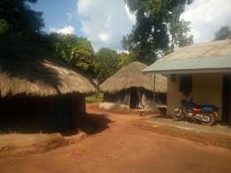 A home on sale in Layibi centre urgently GULU town