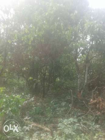 land for sale in ogun state Ifo - image 1