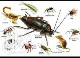 *PEST Control & Fumigation Services/BEDBUGS specialists.