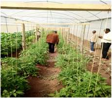 Small-Scale Greenhouses