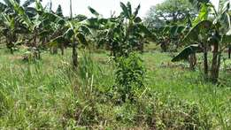 2 Acres of Fertile Agricultural Land For Sale