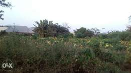Distress Sale of 1Plot of 120/60 in size for Sale in Olufoam