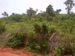 2000 plots of land for sale