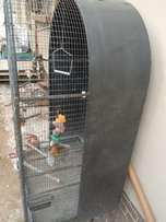 neat cond parrot gage