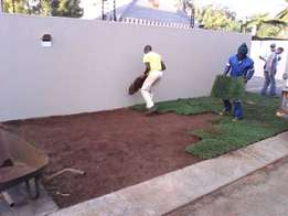 Weed free quality Kikuyu, LM and Evergreen instant lawn at a good pric