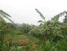 Good 50 by 100ft plot in seeta at 15m