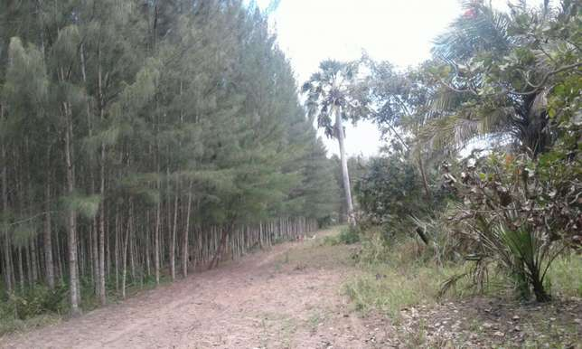 11 acres under casuarina plantation Kwale - image 3
