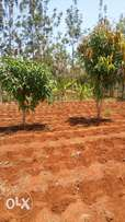 1 acre land for sale at Makuyu, pundamilia. Approx 5.3 kms off tarmac